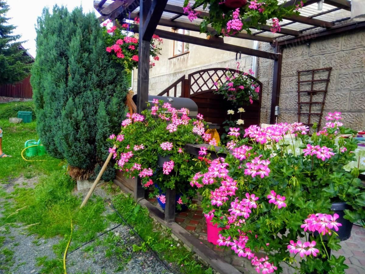 blühende Terasse im Sommer